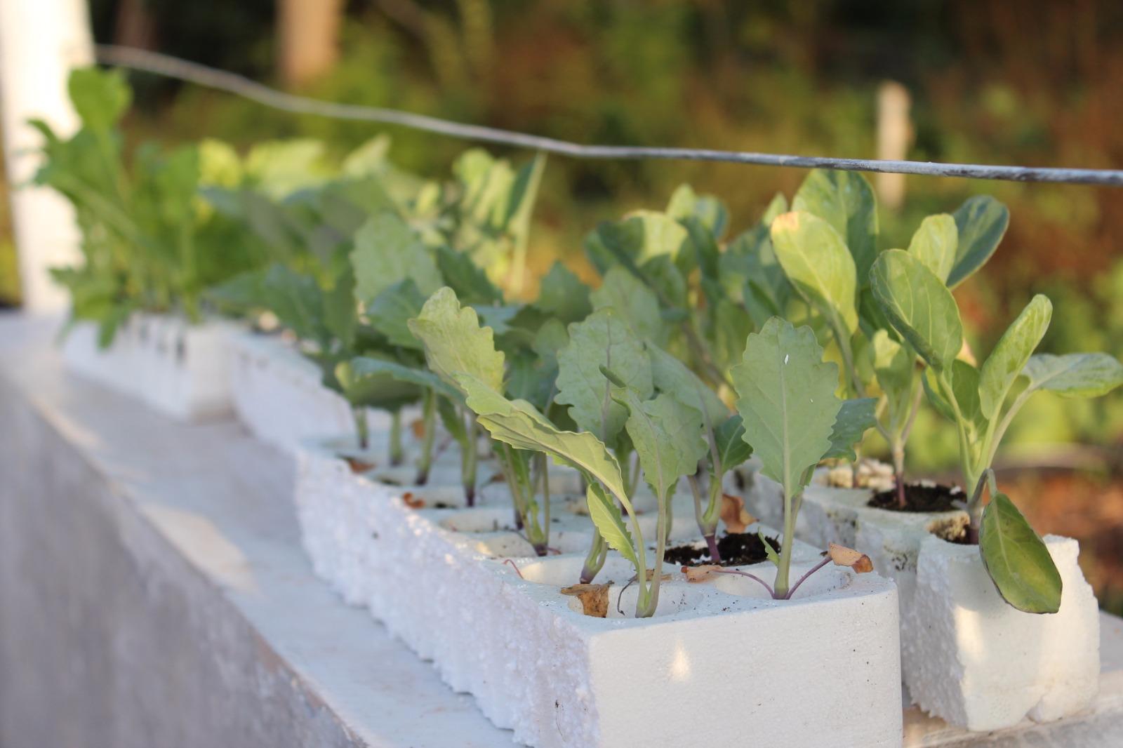Piantine ortaggi da trapianto orti urbani palermo for Piantine ortaggi